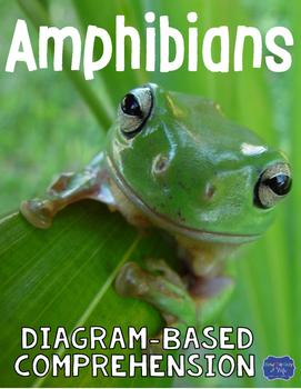 Amphibians Diagram & Comprehension Questions