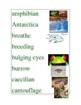 Amphibians/ Frog's Life Cycle Word Wall