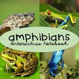 Amphibians Interactive Notebook