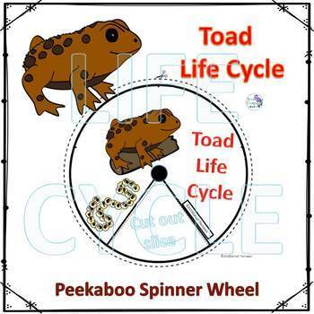 Amphibians Life Cycle Spinner Bundle