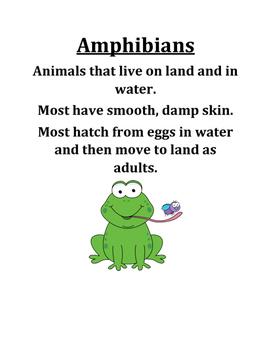 Amphibians Poster