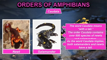 Amphibians - PowerPoint