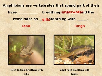 Amphibians Powerpoint