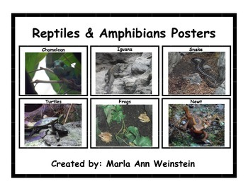 Reptiles & Amphibians Posters