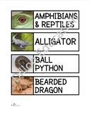 Amphibians & Reptiles Unit