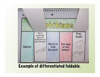 Vertebrates: Amphibians Science Interactive Foldable