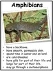 Amphibians - Tab Book and Flip Cards Interactive Notebook