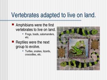 Amphibians&Reptiles PPT