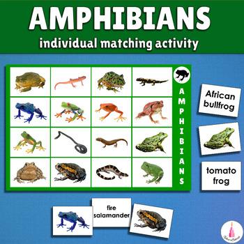 Ampibians Bingo and Matching Activity