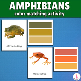 Ampibians Color Matching Activity
