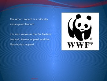Amur Leopard - endangered - Power Point - information facts pictures