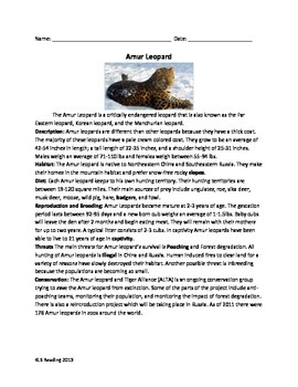 Amur Leopard - endangered review article questions vocabulary word search