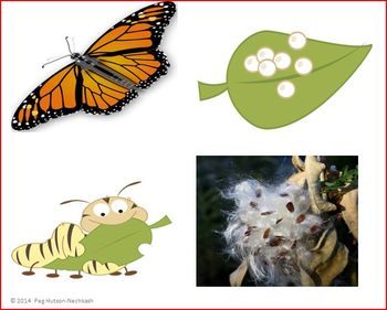 An Interactive Book: A Butterfly Story