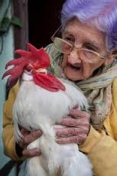 "An Aesop ""Head & Tales"" Play:  The Old Woman and Her Rooster"