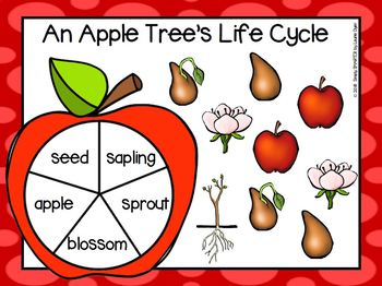 An Apple Tree's Life Cycle Emergent Reader Book AND Interactive Activities