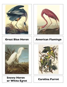 An Audubon Cameo
