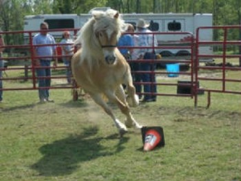 An Equestrian Club