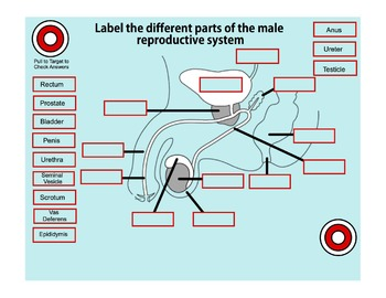 An Interactive SmartBoard Intro to Puberty & the Reproductive System for Gr. 4-6