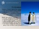 An Introduction to Emperor Penguins