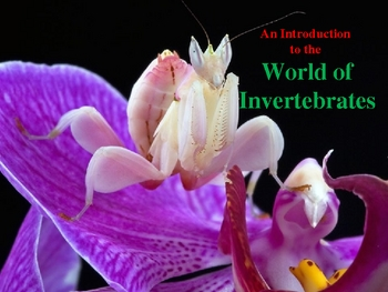 An Introduction to the World of Invertebrates (Part 1)