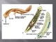 An Introduction to the World of Invertebrates (Part 2)