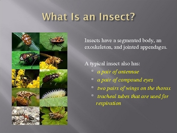 An Introduction to the World of Invertebrates (Part 3)