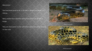 Anaconda Power Point - Information Facts Pictures Video