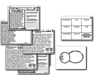 Análisis de texto informativo - Las arañas