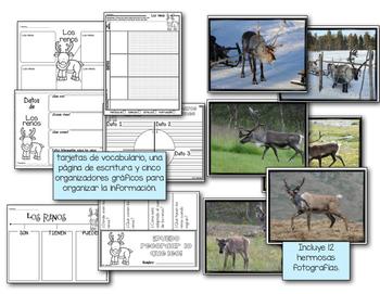 Análisis de texto informativo - Los renos