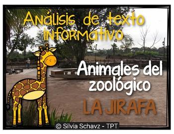 Análisis de texto informativo  de animales del zoológico - Jirafas