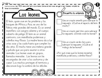 Análisis de texto informativo  de animales del zoológico - Leones