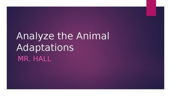 Analyse the animal adaptation