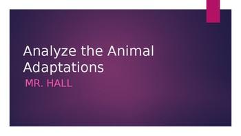 Analyse the animal adaptation