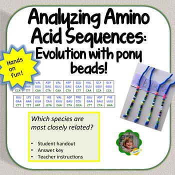 Analyzing Amino Acid Sequences to Determine Evolutionary Relationships