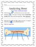 Analyzing Bone Structure Webquest