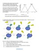 Analyzing Graphics - Enzymes (KEY)