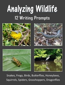 Analyzing Wildlife (Snakes, Frogs, Birds, Squirrels and Bugs)