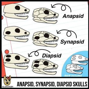 Reptile Skulls Clip Art: Anapsid, Synapsid, & Diapsid