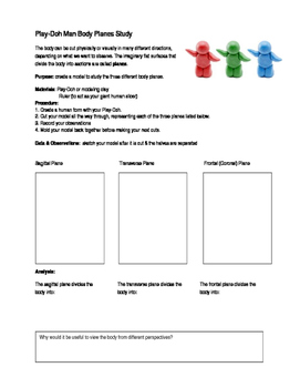 Anatomical Body Planes Model Activity