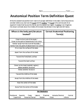 Anatomical Body Position Term Activity Set