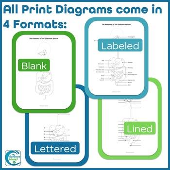 Anatomical Diagrams Bundle