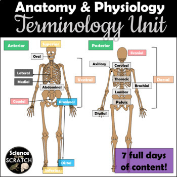 Anatomical Directional Terms Scavenger Hunt By Science From Scratch
