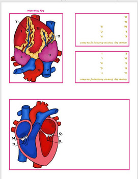 Anatomical Heart Valentines Cute Scientific Anatomy Cards