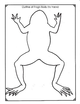 Anatomical Overlays of the Frog