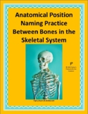 Anatomical Position Naming Practice Between Bones in the S
