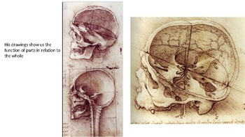 Anatomical Studies;Leonardo Da Vinci