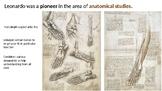 Anatomical Studies;Leonardo Da Vinci