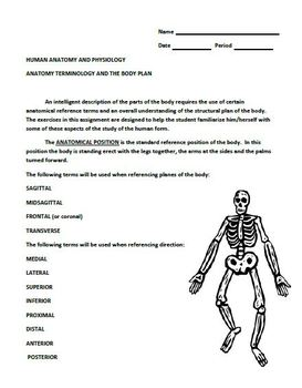 Anatomical Terminlogy and the Body Plan Lab Assignment