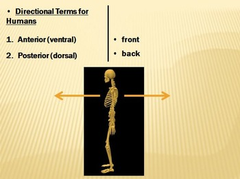 Anatomical Terminology Unit  for Anatomy and Physiology and Biology
