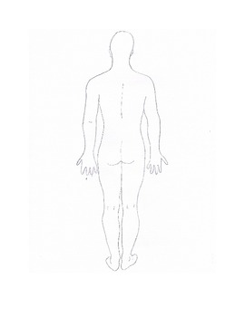 Anatomical Terms Activity - Posterior Body